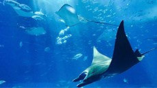 Aquarium Niche